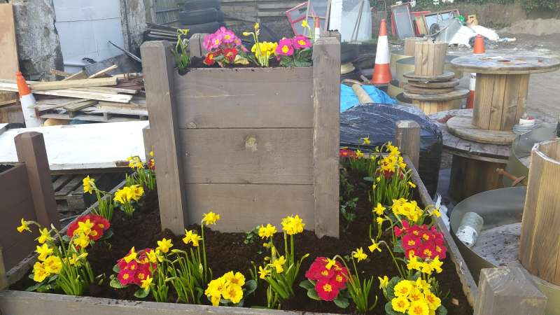 spring bulbs and bedding