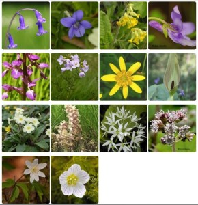 2017 Spring Wildflower Survey