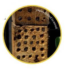 bee habitat in wood