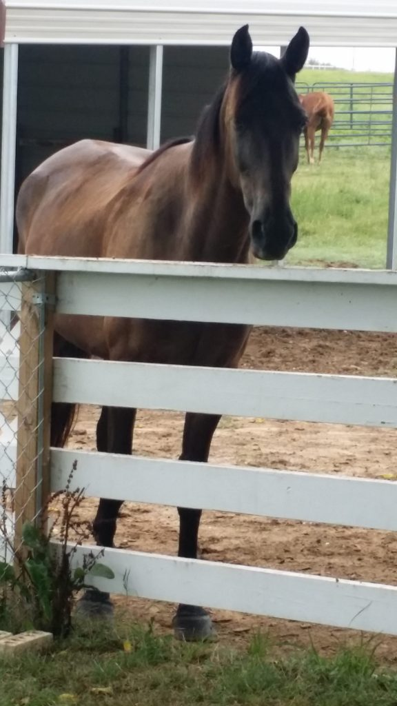 Swingin' D Horse Rescue - Elvis