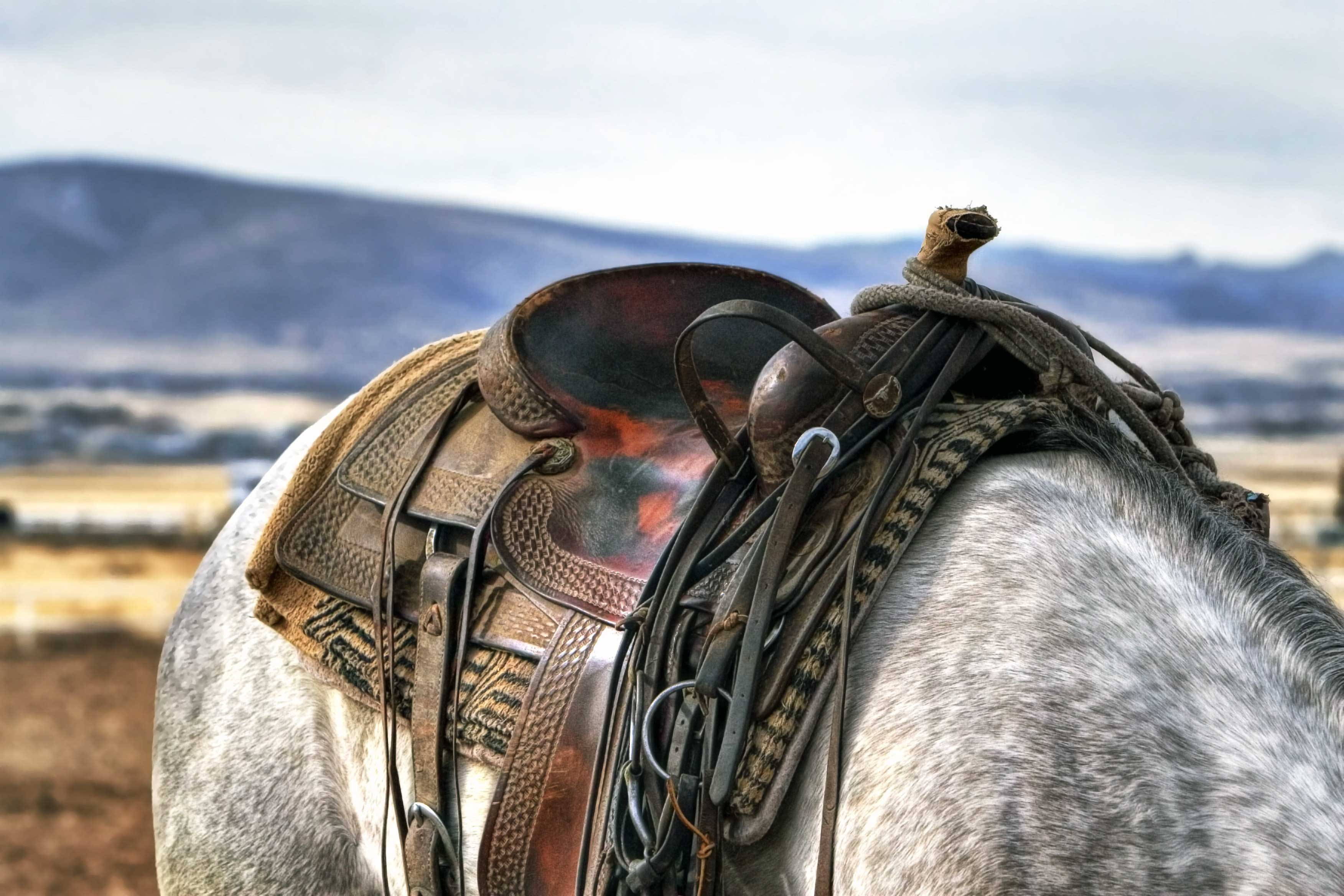 Shop for horse tack and gear