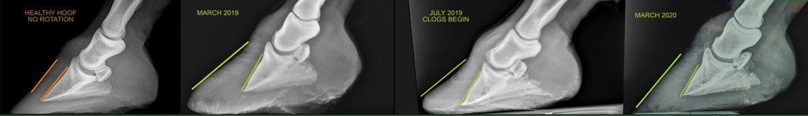 ANI-HOOF-XRAY-COMPARISON
