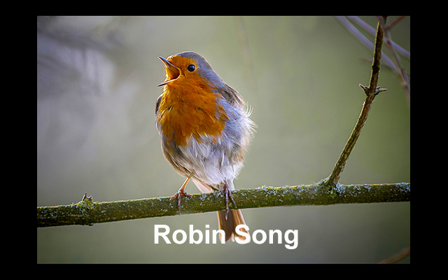 22 Robin Song copy
