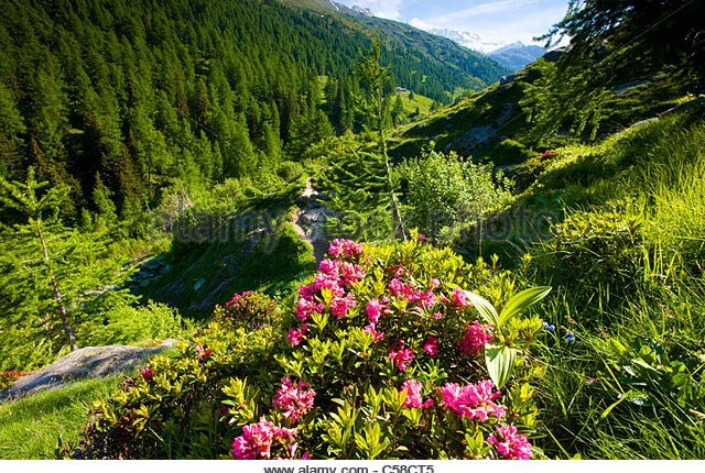 valley-of-binn-switzerland-europe-canton-valais-nature-reserve-valley-Natural park Binntal