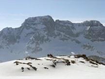 Ski tourers on Silberen