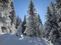 Beautiful snow covered trees