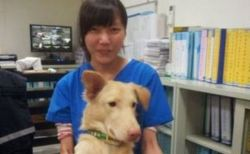保護施設のスタッフが自殺してから約1年、台湾で動物の殺処分が禁止される