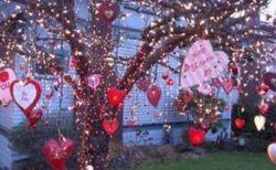 亡き妻を思い、バレンタインデーに庭先の木を美しく飾る男性が素敵