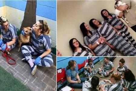 虐待された犬たちの心のケアを受刑者が行うプログラムが話題に