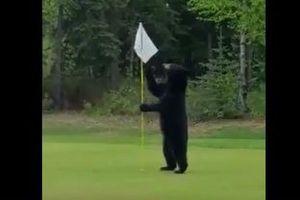 「これは何かな?」アラスカでゴルフのプレー中にクマが出現、男性が追い返す