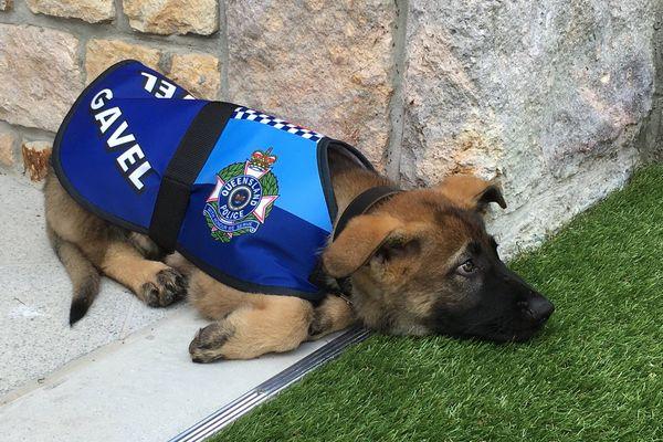 あまりにもフレンドリーなため解雇された警察犬、性格にぴったりな新たな仕事に就く