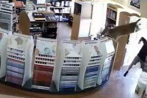 突然、ドアのガラスを破って鹿が店に侵入、大慌てで逃げていく姿に店主も困惑