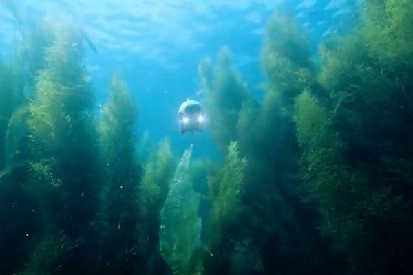尾びれを動かして進む、魚の形をした水中ドローンがかわいらしい