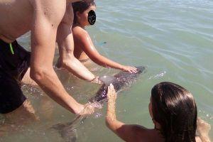 海水浴客が自撮りを繰り返し、打ち上げられた赤ちゃんイルカを死なす