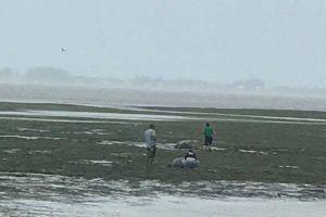 ハリケーン「イルマ」がフロリダに上陸、巨大クレーンが回転する様子が恐ろしい
