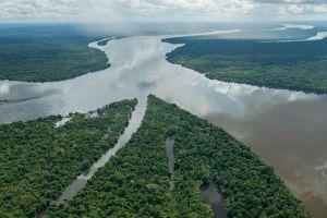 アマゾンでの研究により2年間に381の新種が発見される:WWF報告