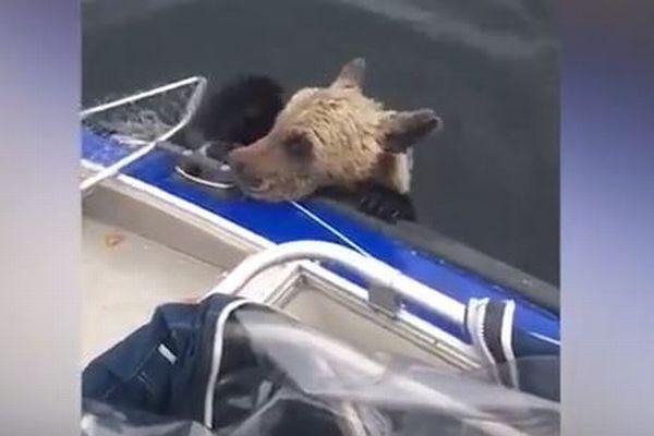 湖で溺れそうになっていた野生の子グマたち、漁師が船に乗せて救助に成功