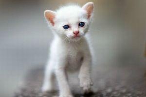 世界遺産登録のために奄美や沖縄の猫が大量殺処分へ…国の科学的根拠が乏しいと4万人が抗議