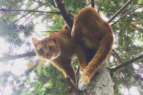 高い木から下りられなくなったネコを、無償で救出し続けてきた兄弟が話題に