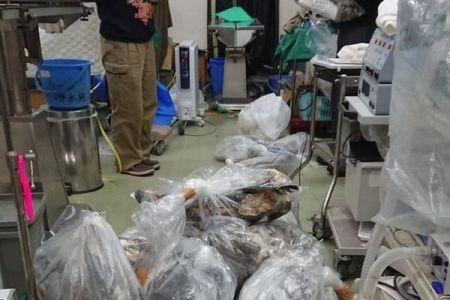 風力発電により多くのオジロワシが被害に、猟で使用する鉛弾による中毒死も増加