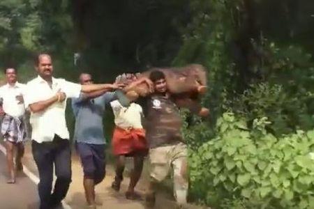 インドの人々が水路から子ゾウを救出、背中に抱えて母親のいる森へ届ける
