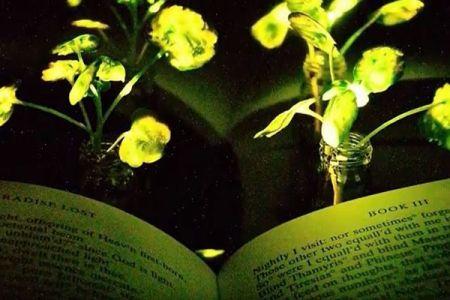未来は樹木が街灯に?MITがナノ粒子を使い、植物を約4時間も発光させることに成功