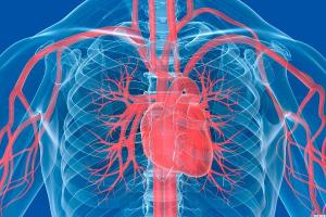 3Dプリンターで人の心臓を作ろうとするスタートアップ企業の取り組みが話題に