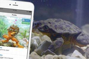 ジュリエットを探せ!絶滅寸前のオスのカエルが恋人募集サイトに登録