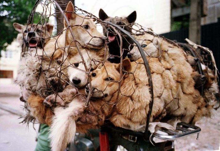 平昌オリンピックの裏で犬肉が食べられているとして世界が注目