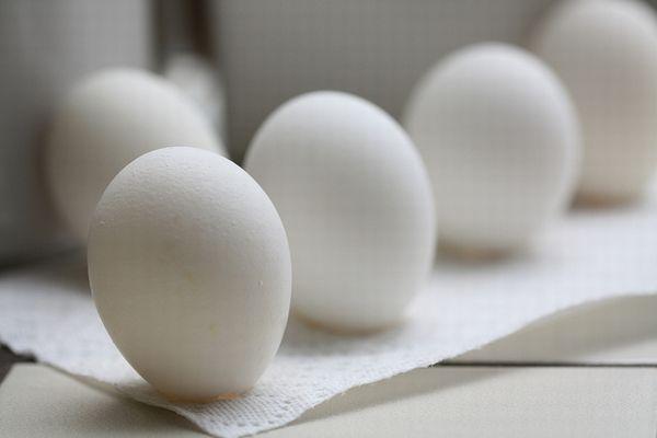 翻訳ソフトの誤訳が原因か?ノルウェーのオリンピック・チームに膨大な数の卵が届く