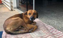 【ブラジル】病院の前で帰らぬ主人を、4カ月も待ち続けるワンコの姿が切ない