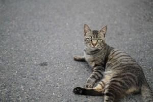 フランスで猫を撃とうとしていた町長が、誤って子供を撃ち物議に