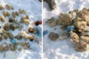 【閲覧注意】切り落とされた人間の手が54個、ロシアでバッグから発見される