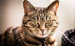 死んだ猫が蘇る?埋葬したはずのニャンコが自宅に戻り飼い主もビックリ