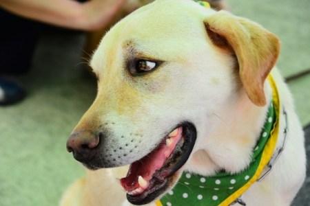 日本で介助犬の利用者が公共の場で差別を受けている、調査で明らかに