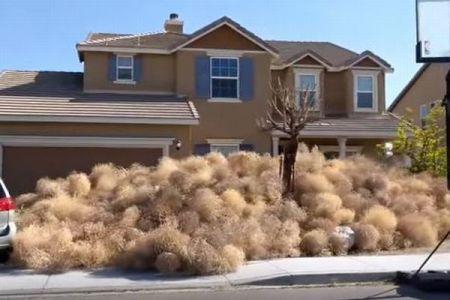 植物が街を侵略?米で多くの家が「転がる草」に覆われ、住民も困惑