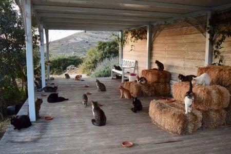 55匹のネコと一緒に暮らすだけでお給料がもらえる!ギリシャでユニークな仕事を募集