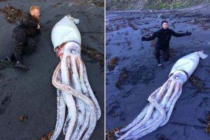 その長さ4メートル以上、NZの海岸に巨大なイカが打ち上げられる