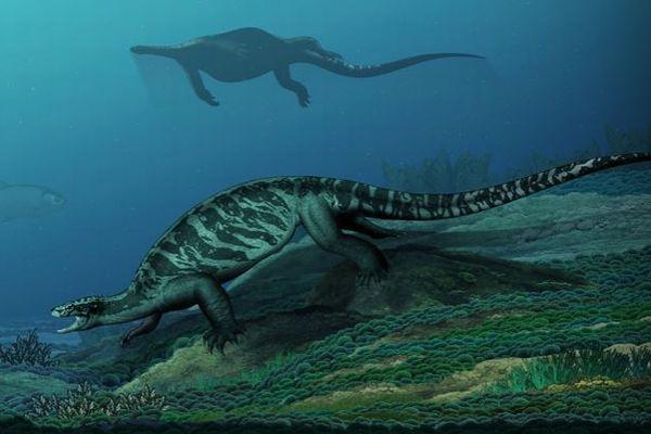 「進化は直線的ではなかった」甲羅のないカメの化石が、新たな可能性を示す