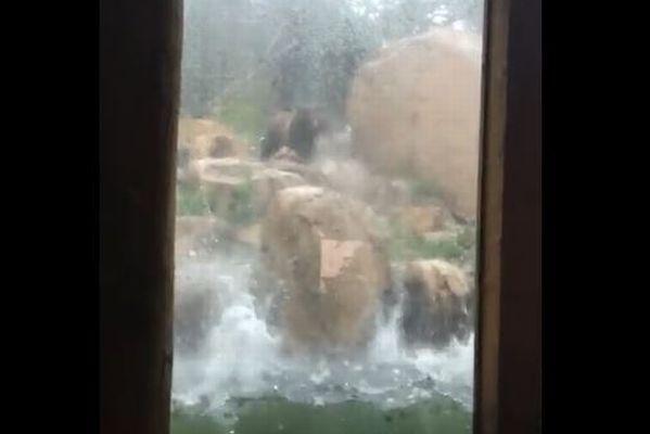 コロラド州にソフトボール大の雹が降り、動物園で飼われていた動物たちが死亡