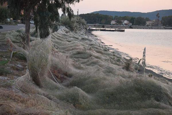 ギリシャで突然、大量のクモの巣が出現、気温の上昇が原因か?