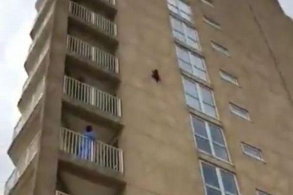 ビルの壁に貼り付いていたアライグマ、9階部分からジャンプする姿が驚異的