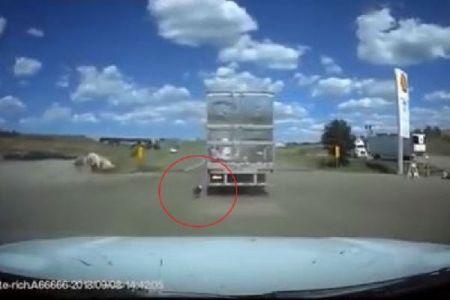 走り出したトレーラーに繋がれたままのワンコ、果たして彼の運命とは?