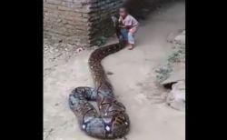 驚愕!インドネシアで巨大なパイソンと遊ぶ幼児の姿が撮影される