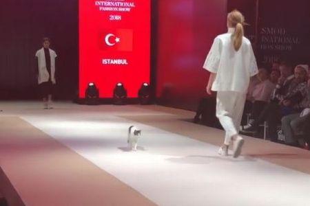ファッションショーのキャットウォークにネコが登場、モデルに絡む姿がカワイイ