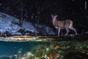 ロンドン自然史博物館選定の写真コンテスト、優勝作品が発表される