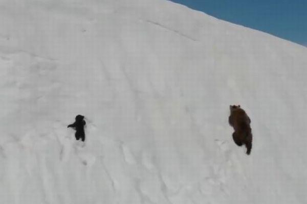 何度滑り落ちてもあきらめない!雪の斜面を登る子グマの動画が感動的