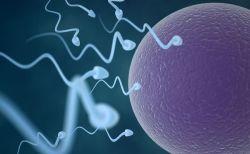 米で開発されたジェル状の男性用避妊薬、効果や安全性を確認する研究が進む