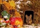 自宅の庭に暮らすハツカネズミのために作られた、ミニチュアサイズの村が可愛い