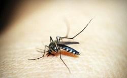 ブルキナファソでマラリア根絶に向け蚊を用いた実地試験開始されようとするも議論に